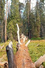 Mammutbaum vs. Manual Mike – Sequoia National Park, CA