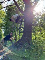 Treeride von Stephan Götz
