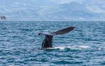 10 Best Things to Do on a Gap Year in New Zealand whales