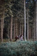 pferde-test-0305-kopie