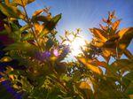 Alle Fakten über die Sommersonnenwende - In der Natur