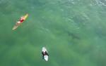 drone-surfer-hai-australien