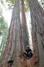 Boogie, Sequoia Nationalpark