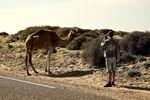 Max Schulz hat die Kamele gefunden. credit: Erik Schubert