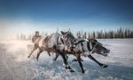 Take me away, deer, Russia | Foto: Kamil Nureev