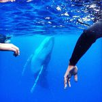 whale-photobomb-diver-will-rosner-australia-10