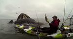 Humpback-whales-breach-next-to-kayaker