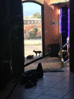 Katzen schauen zut Tür hinein. credit: Vincent Frey