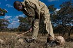 BrentStirton_SouthAfrica_Professional_NaturalWorldWildlife_2020