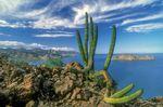 Foto: iStock/Baja