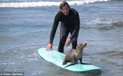Dan Murphy sea lion