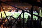 Basilikumplantage im Untergrund von Neapel. Foto: Martina Zollner