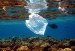 Foto: Mediterranean Association To Save The Sea Turtles