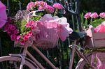 Die ganze Stadt wird zur Feier der Giro herausgeschmückt. (Bild: Sirotti)