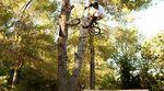 Tree60 Nosebonk to Barspin?!? Ryan Nyquist zeigt auf dem Vans Kill The Line Contest 2014, wozu die Pinienbäume am Rande der Peynier Trails gut sind.