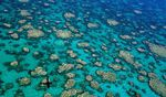 Foto: Kerry Bell/ ARC Centre of Excellence for Coral Reef Studies Coral