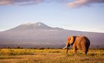 Mountaineering Holiday World Guide Expeditions Kilimanjaro Tanzania Africa
