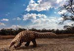 5997_20391_BrentStirton_SouthAfrica_Professional_NaturalWorldWildlife_2020