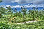 Die Kletterpartien rund um Sri Lankas Teeplantagen sind anspruchsvoll, entlohnen aber mit einer fantastischen Szenerie. Foto: SpiceRoads
